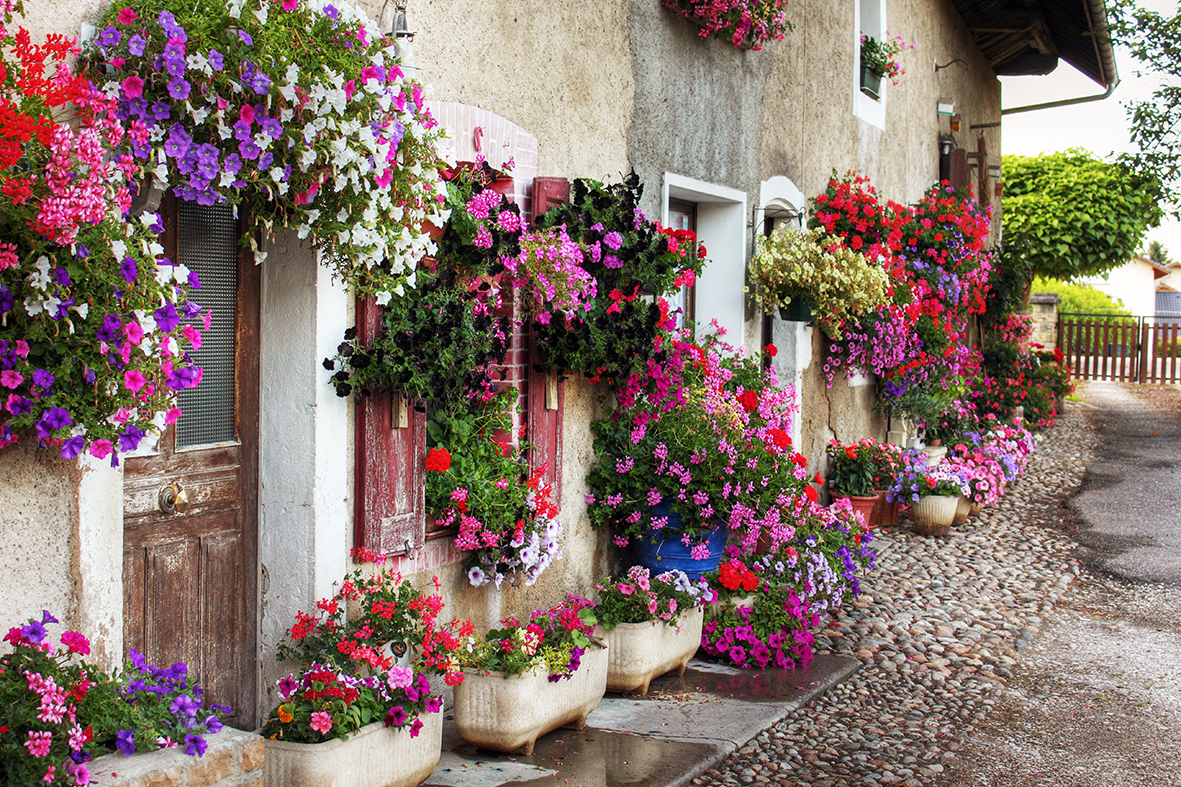 7 Easy Tips For Hanging Baskets How To Videos Diy As