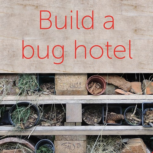 Build a bug hotel graphic