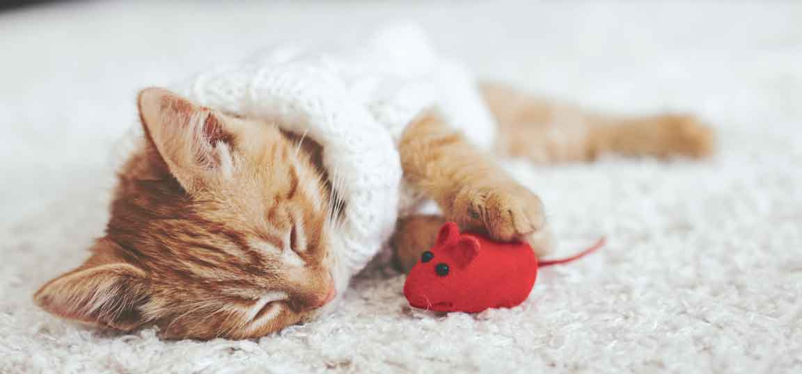 Kitten playing with red mouse