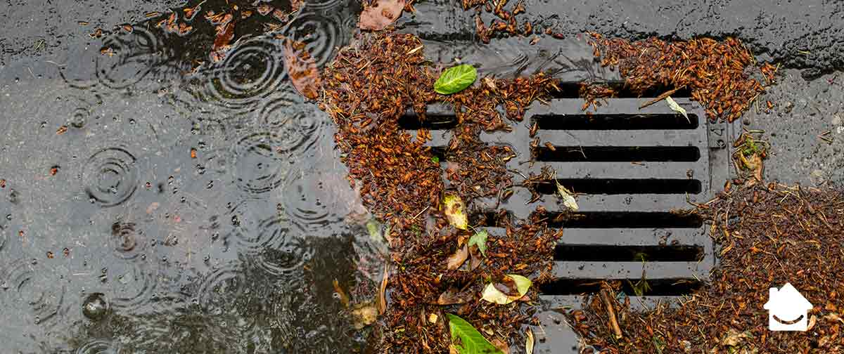 Clear your drains from leaves and debris