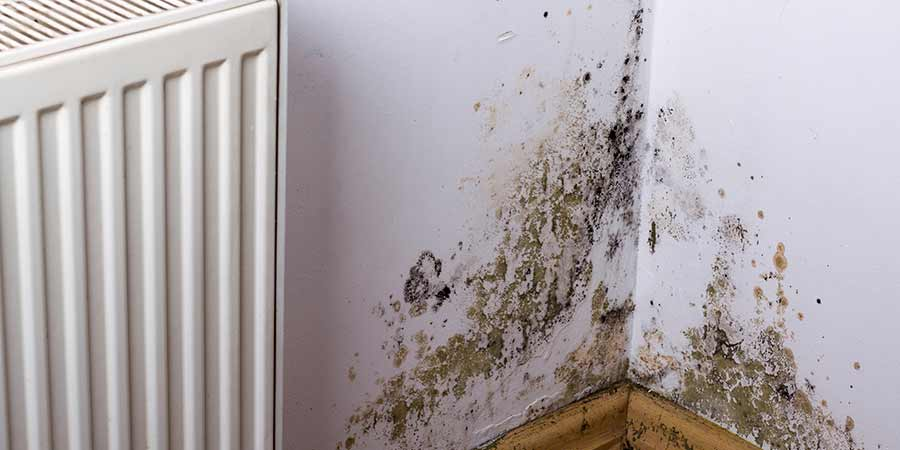 how to get rid of mould on walls