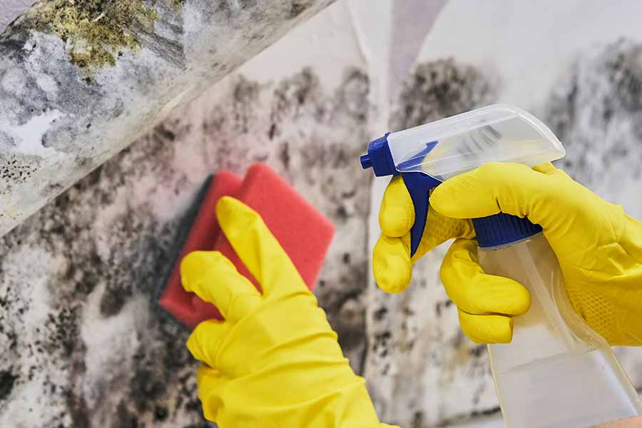 How To Get Rid Of Mould Top Removal Tips Living By Homeserve